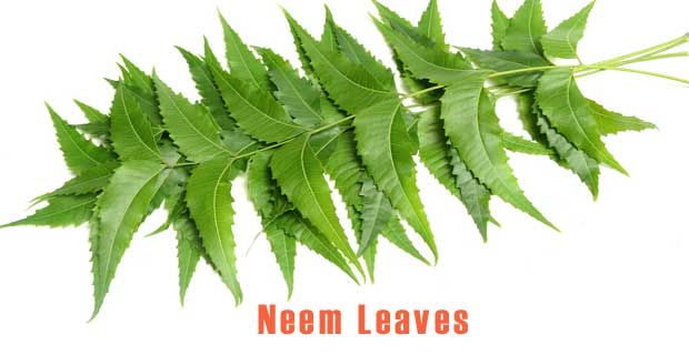Neem Leaves boiled in water