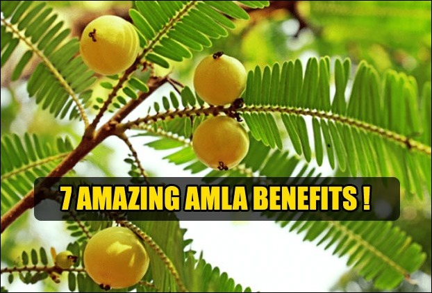 The benefits of Amla is spread across several ailments of human body