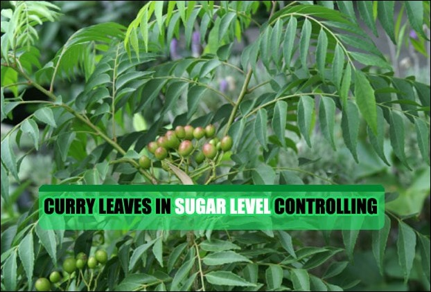 Curry Leaves are very benefitial in diabetes control