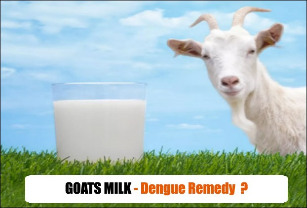 Goats milk is beneficial in platelets remains doubtful