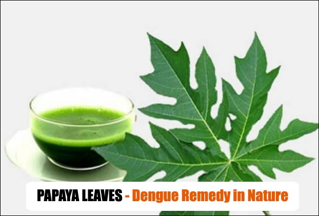 Papaya Leaves Juice for dengue treatment