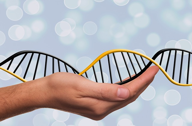 Prurine - the source of uric acid, is vital for DNA repair and maintenance