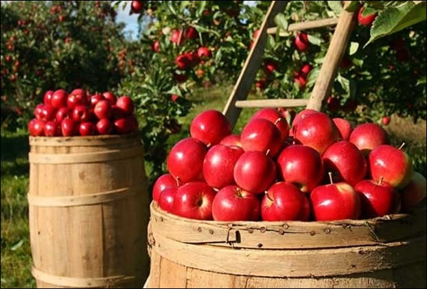 Different researches have suggested that apple juice good for the heart and body